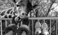 A giraffe on my balcony – the crazy contents of thoughts